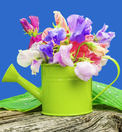sweet peas in can