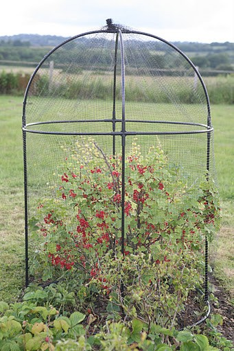 Haxnicks Steel Round Fruit Cage