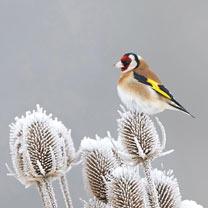 Winter Bird Feeding Mix Seeds