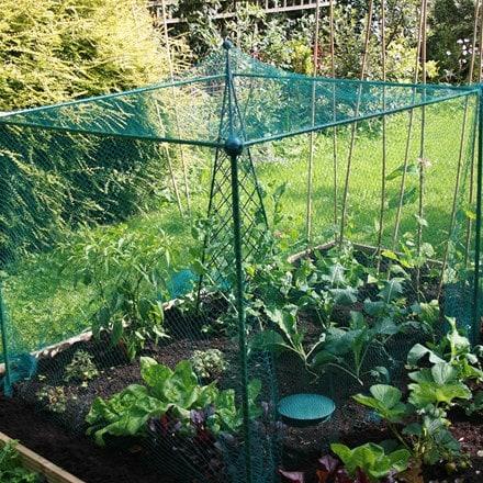 Light duty fruit cage