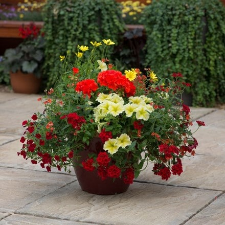 Heat wave - Easyplanter for hanging baskets & patio pots